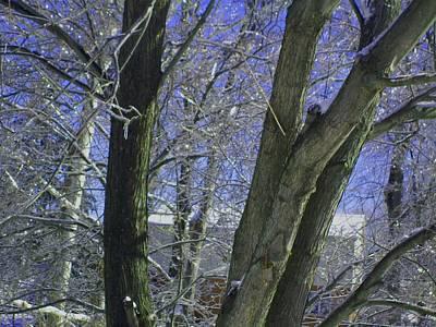 Winter Trees Art Print by Misty VanPool