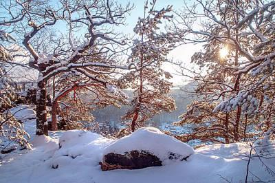 Photograph - Winter Trees Of Saxon Switzerland by Jenny Rainbow