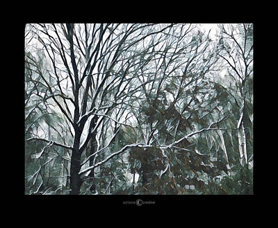 Photograph - Winter Trees Southwind by Tim Nyberg