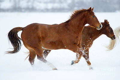 Animals Photos - Winter Trot by Mike Dawson