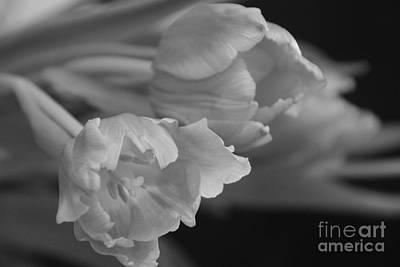 Photograph - Winter Tulip 3 by Jennifer E Doll