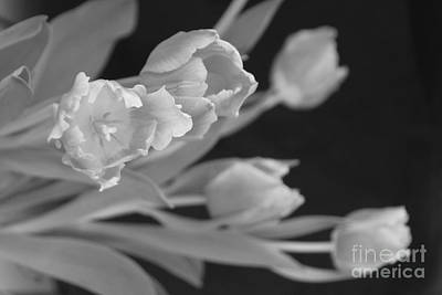Photograph - Winter Tulip 5 by Jennifer E Doll
