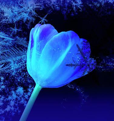 Photograph - Winter Tulip Blue Theme 2 by Johanna Hurmerinta