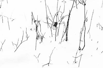 Photograph - Winter Twigs 2 High Contrast by Mary Bedy