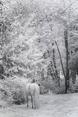 Black Unicorn Photograph - Winter Unicorn by Wes and Dotty Weber