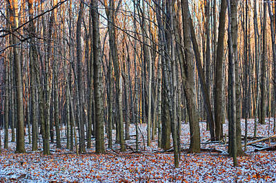 Photograph - Winter - Uw Arboretum Madison Wisconsin by Steven Ralser