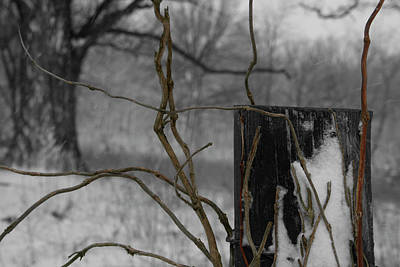 Photograph - Winter Vines by Dylan Punke