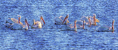 Photograph - Winter Visitors by HH Photography of Florida