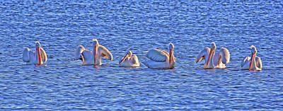 Photograph - Winter Visitors 2 by HH Photography of Florida