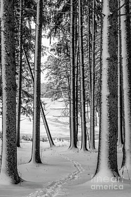 Photograph - Winter Walk by Joann Long