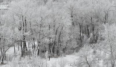 Photograph - Winter Walk by Mark Lehar