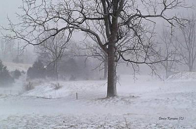 Photograph - Winter Walnut by Denise Romano