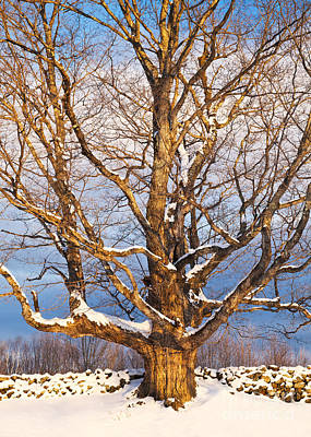 Photograph - Winter Warmth by Alan L Graham