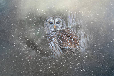 Painting - Winter Watcher by Jai Johnson