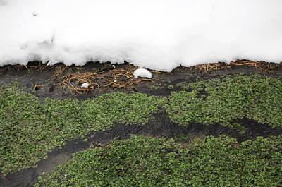 Watercress Photograph - Winter Watercress by Indigo Schneider