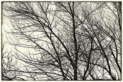 Photograph - Winter Whispers by Karen Adams