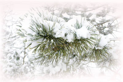 Photograph - Winter White by Barbara  White