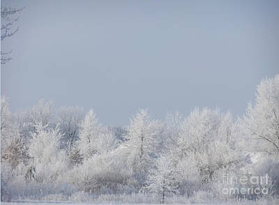Photograph - Winter White by Deborah DeLaBarre