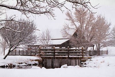 Photograph - Winter White by Donna Kennedy