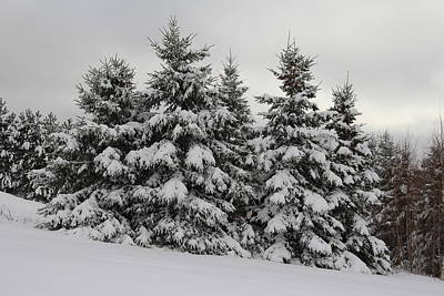 Photograph - Winter White - Nova Scotia Landscape by Kathleen Sartoris