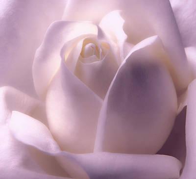Winter White Rose 2 Art Print