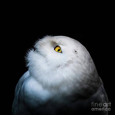 Photograph - Winter White Snowy Owl by Patrik Lovrin