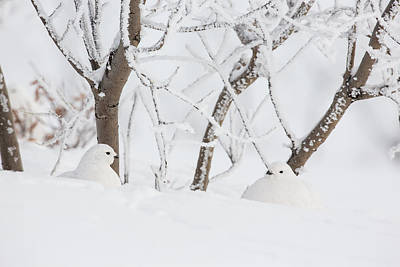Hiding Photograph - Winter Whites by Tim Grams