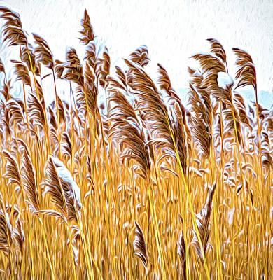 Photograph - Winter Wild Grasses - Paint by Steve Harrington