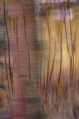 Photograph - Winter Willows Abstract by Deborah Hughes