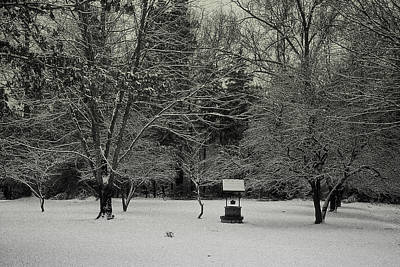 Photograph - Winter Wishes by Laura DAddona