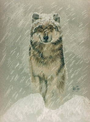 Drawing - Winter Wolf by Barbara Keith