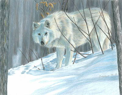 Drawing - Winter Wolf by Carla Kurt