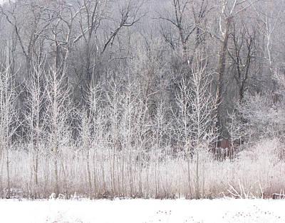 Photograph - Winter Wonder by Ann Bridges