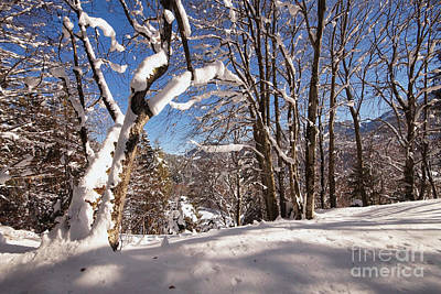 Photograph - Winter Wonderland 1 by Rudi Prott
