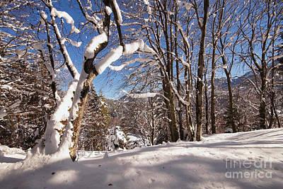 Photograph - Winter Wonderland 1 by Rudi Prott