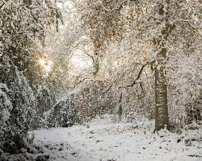 Photograph - Winter Wonderland 2 by Kathryn Bell