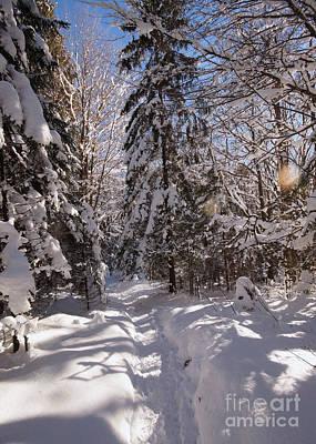 Photograph - Winter Wonderland 2 by Rudi Prott