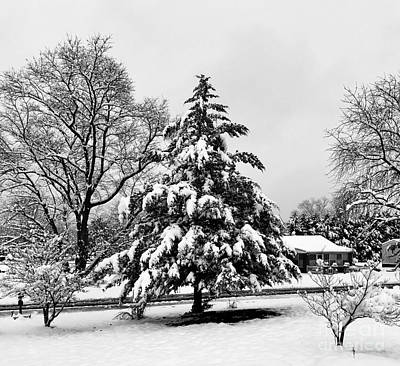 Photograph - Winter Wonderland - 2017 by Joe Finney-Katie B