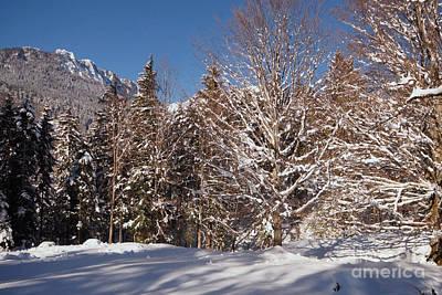 Photograph - Winter Wonderland 3 by Rudi Prott