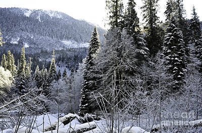 Photograph - Winter Wonderland by Clayton Bruster