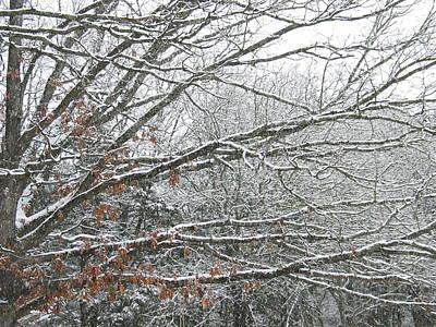 G B Photograph - Winter Wonderland by G B