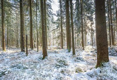 Photograph - Winter Wonderland by Hannes Cmarits