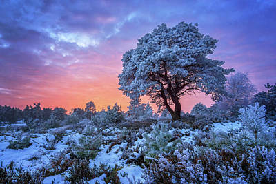 Winter Trees Photograph - Winter Wonderland II by Martin Podt