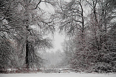 Winter Wonderland II Art Print