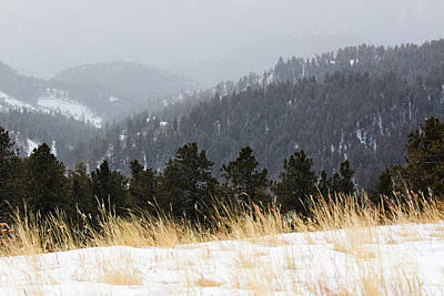 Photograph - Winter Wonderland In The Pike National Forest by Steve Krull