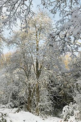 Photograph - Winter Wonderland by Kathryn Bell