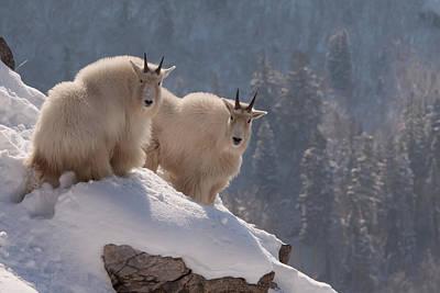 Photograph - Winter Wonderland by Kent Keller