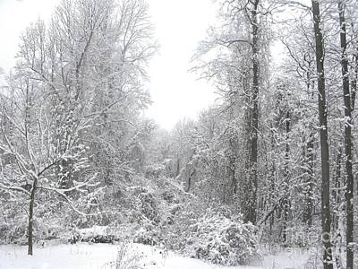 Winter Photograph - Winter Wonderland by Laura Corebello
