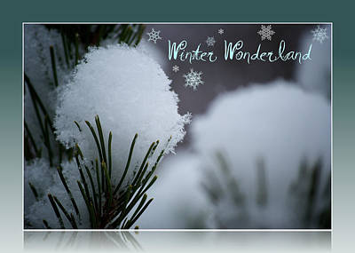 Photograph - Winter Wonderland by Lisa Knechtel
