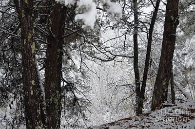 Photograph - Winter Wonderland by Maria Urso